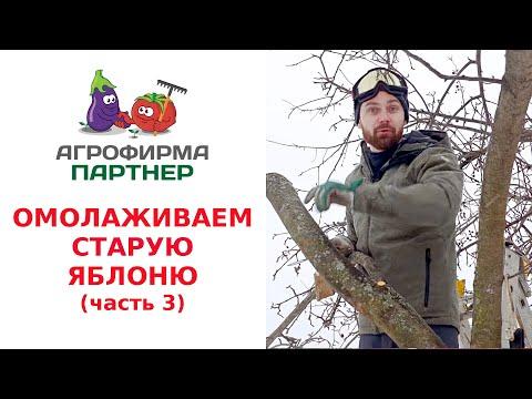 Вопрос: Как обрезать лесную яблоню?