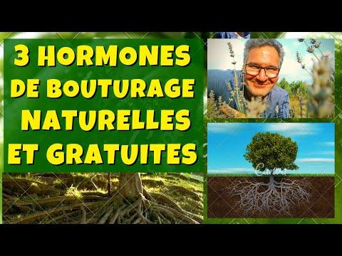 3 hormones de bouturage naturelles et gratuites