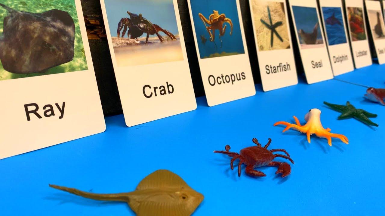 Marine Animals for Kids Flashcards #shorts