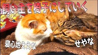 椅子に座っていたら次々と猫たちがお腹の上にやってきました