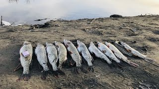 БЕШЕНЫЙ ЖОР ЩУКИ Открытие весеннего сезона 2020 Отличная рыбалка Волго Ахтубинская пойма