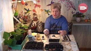 Персональный блог садовода и огородника Светланы Кацаповой 25 выпуск (ответы на вопросы по рассаде)