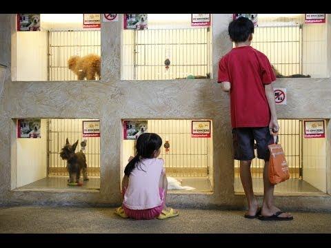 Pet Shop Business Website, Web Design, SEO Web Marketing Services *****