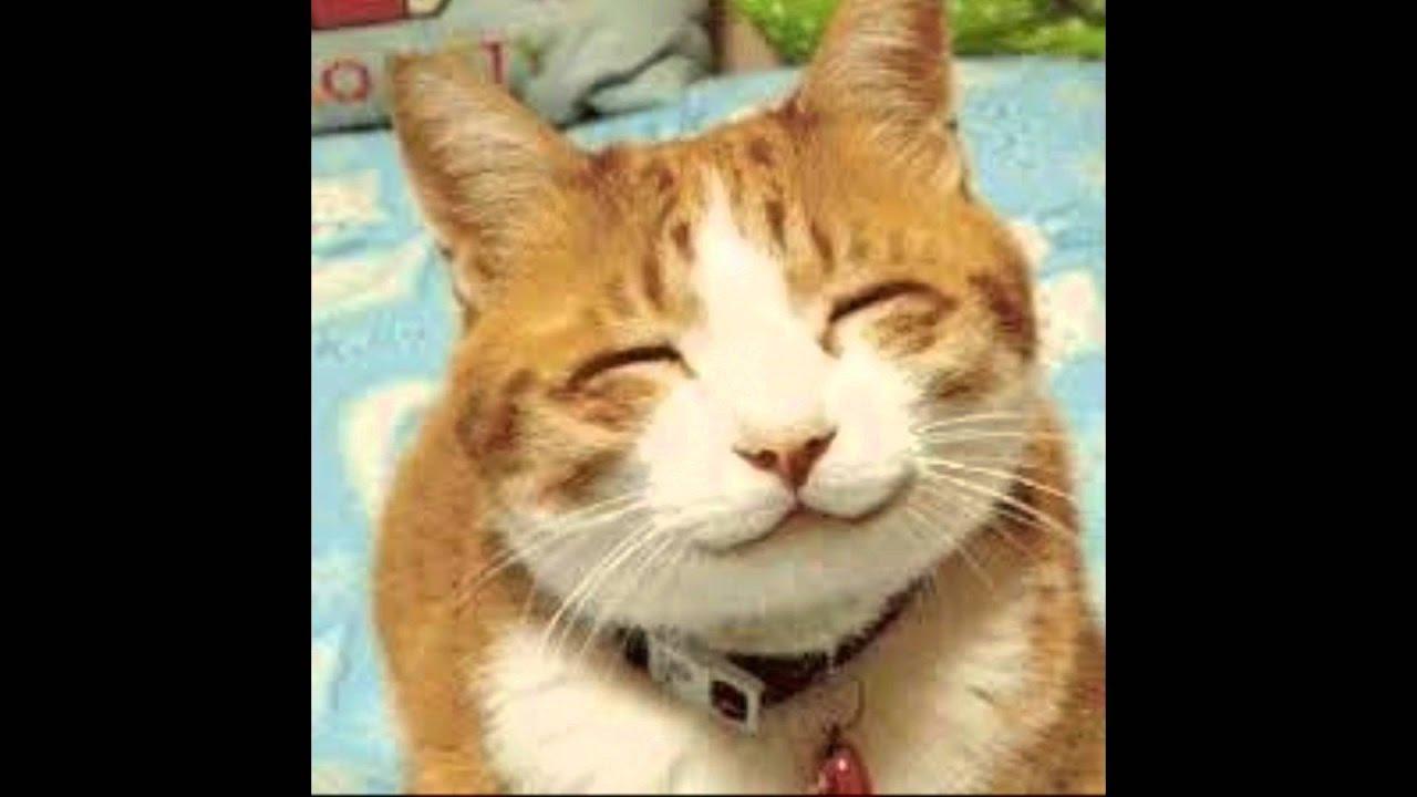 Gatos Lindos E Brincalhão#2