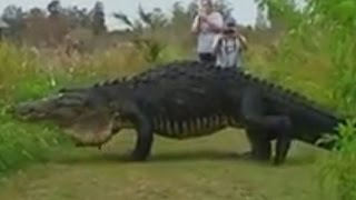 Repeat youtube video Massive Prehistoric Monster Caught On Camera