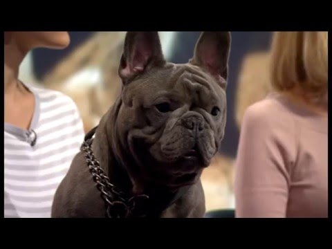 BBC World News - IQ Test for dogs