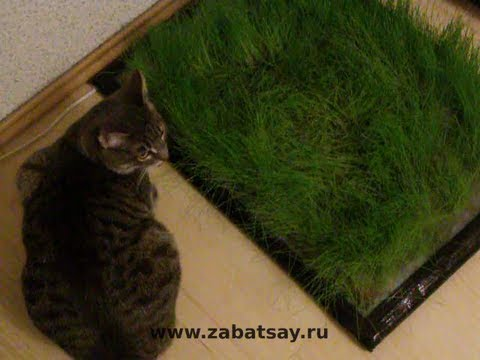 ручной измельчитель травы - YouTube