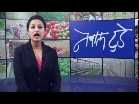 NEPALTODAY_20740425 : Vegetable, Fish, Livestock Farming