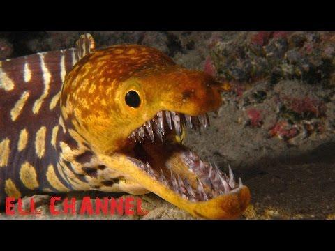 10 ყველაზე მომაკვდინებელი ზღვის არსება (ვიდეო)