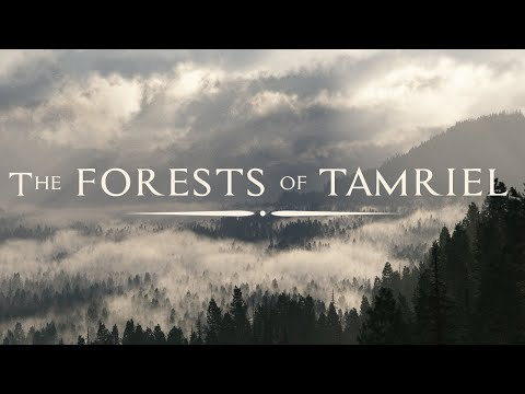 """Jeremy Soule — """"In The Forests of Tamriel"""" [Forest Pine - Day - BSA]"""