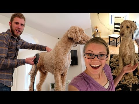 GROOMING OUR STANDARD POODLE! (5.26.17)