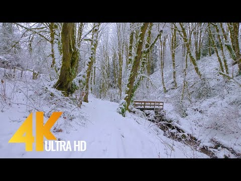 4K Virtual Winter Walk - Walking in a Snow Forest - 3.5 HRS of Crunching Snow Sound