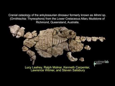Kunbarrasaurus (formerly Minmi sp.) - Australian ankylosaur: skull, brain endocast, etc.