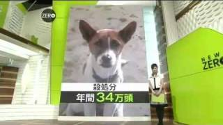 【ペット】処分される命 1 (2008 10 23)