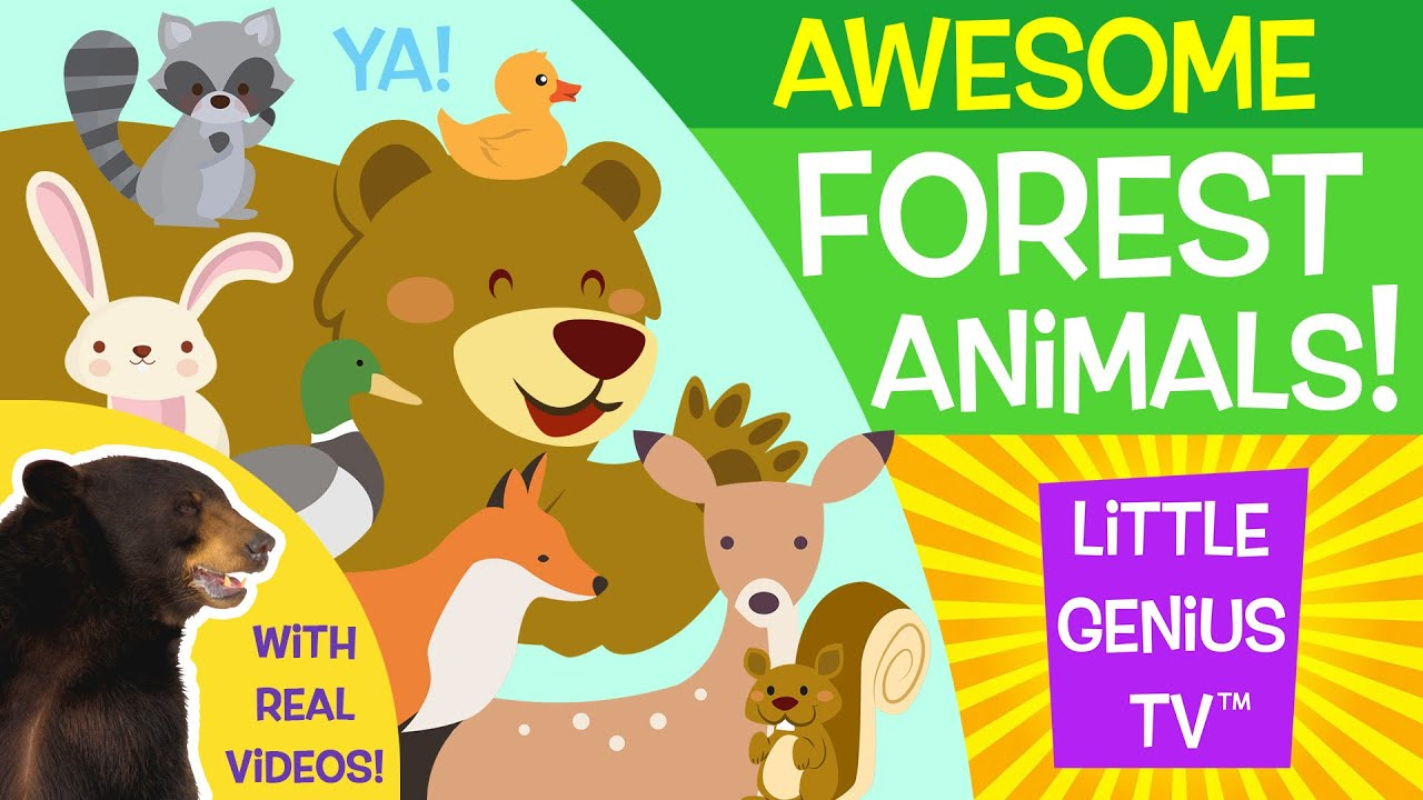 Animals videos for kids