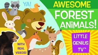 Forest Animals! | videos for babies, toddlers, kids | Little Genius TV™
