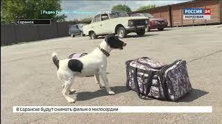 Ровно 110 лет назад в Санкт  Петербурге открыли первый в России питомник полицейских собак
