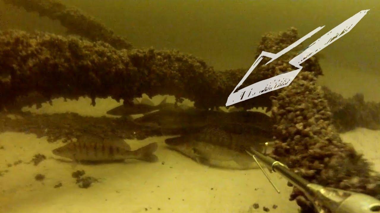Где зимуют Судаки. Подводные съёмки Днепр Зимний сезон.