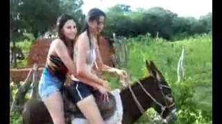 Double Donkey Riders