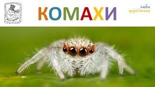 Комахи та інші малі істоти. Навчальне відео для дітей українською