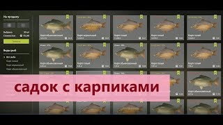 Русская рыбалка 4 - озеро Медвежье - Сдаю садок карпов