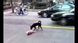 事故にあった仲間を気遣う犬の感動動画 thumbnail