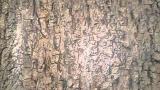 Wallpaper kertas dinding 3D