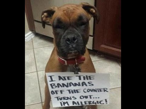 Dog owners put their pets to shame