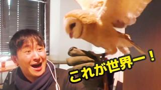 浅草フクロウカフェ「ふくろう神社」 http://www.owl-shrine.com/ 世界...