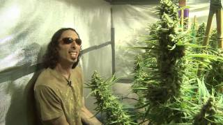 Kyle Kushman & Shiloh Massive Veganic Cannabis Cultivation Trailer