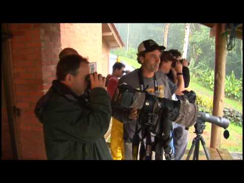 Colombia Birdwatch - Birding Adventures TV Episode