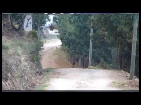 Veados Serra da Lousã 3