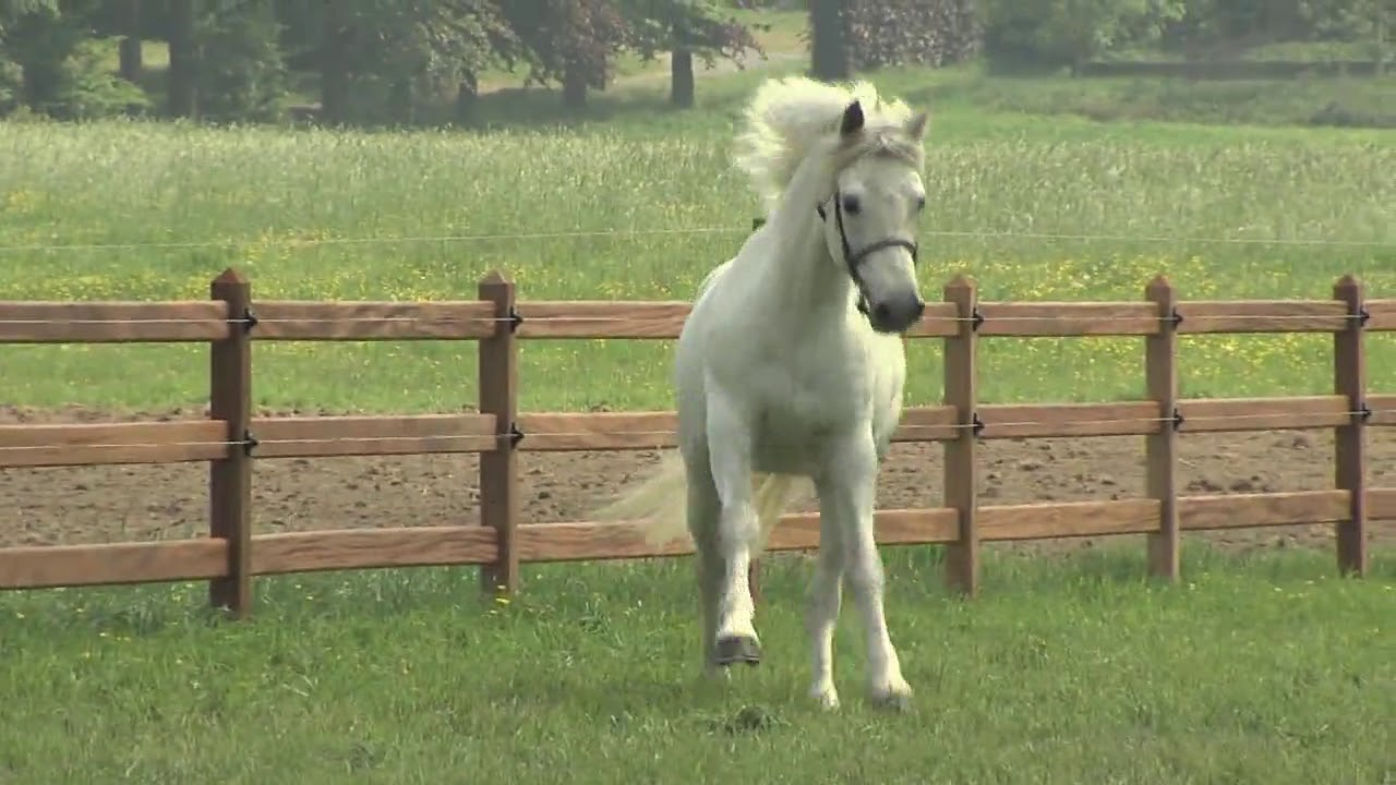Ongekend Wie zijn we? — Connemara pony ZR-75