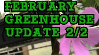 FEBRUARY GREENHOUSE TOUR: ORCHIDS AND CARNIVOROUS PLANTS 2/2