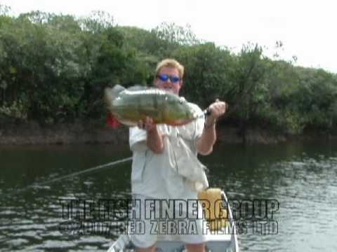 peacock bass fishing with steve townson - the fish finder! - youtube, Fish Finder