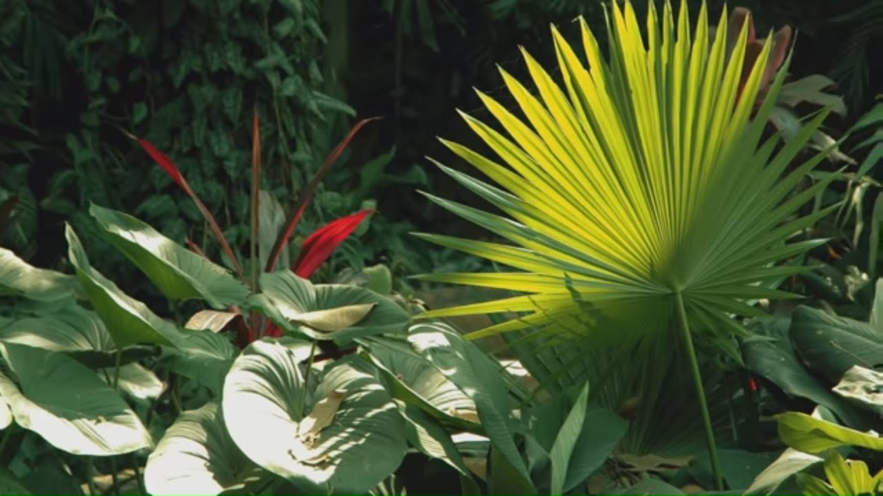 How to Make a Tropical Style Garden How to Make a Tropical Style Garden new foto