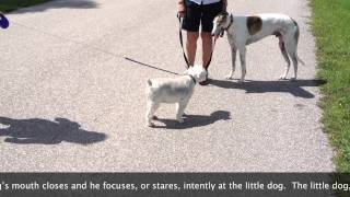 Greyhound's Body Language - Dog Training Of Fort Myers - Patrick Logue