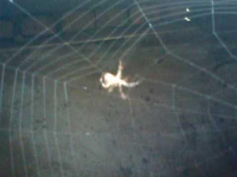 Spider net construction