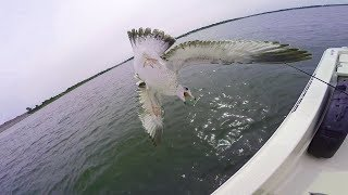 I Caught a SEAGULL out of MID AIR - WHAT!?!?