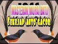 Masteran Murai Batu Paling Joss Untuk Murai Jenis Apapun  Mp3 - Mp4 Download