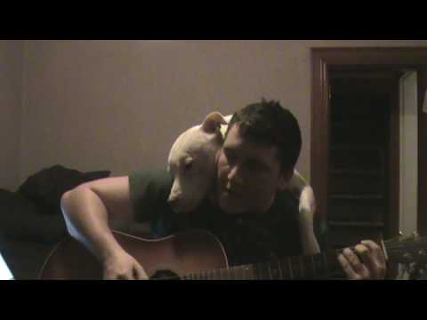 This Guy Singing To His Pit Bull Is Giving Us All The Feelings