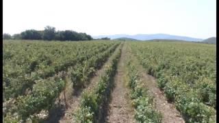 У кубанских аграриев -новая сельхозтехника(, 2016-07-20T11:12:55.000Z)