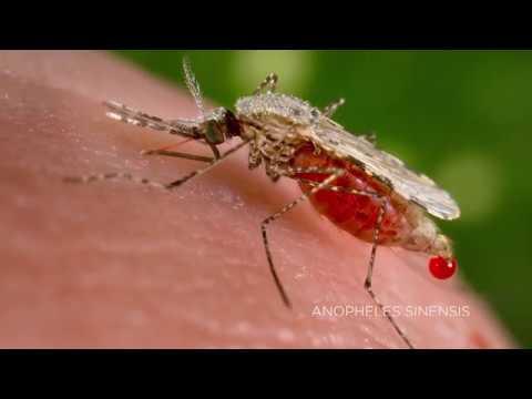 Прогнозирование вспышек малярии с помощью искусственных спутников