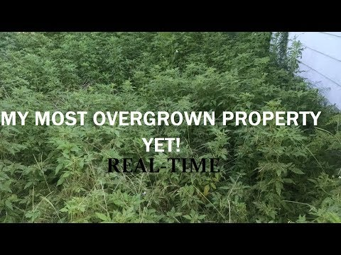 Mowing the Most Overgrown Lawn in My Career - Real Time, Raw Audio