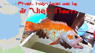 Phát hiện loài cá lạ ở Việt Nam