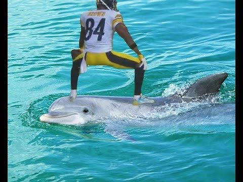 Antonio Brown TWERKS On Dolphin After 2 Touchdowns, Matt Moore Knocked Out By Bud Dupree Sack