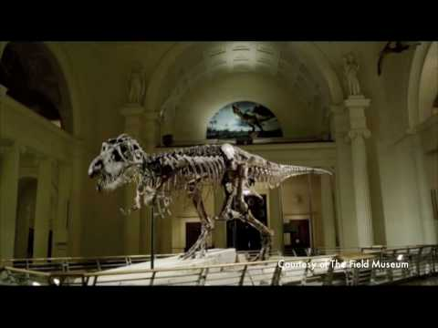 Field Museum celebrates a decade of Sue