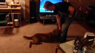 Petstew.com: Dog Does Army Crawl