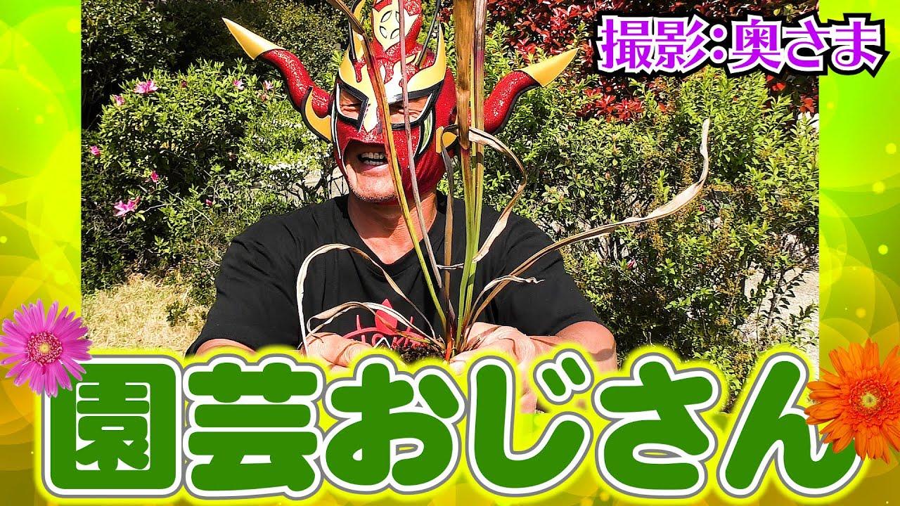 【自宅撮影】プロレス界No.1の「園芸おじさん」!得意技は「土まぜまぜ」!
