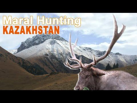 MARAL Hunting In Kazakhstan / 2017